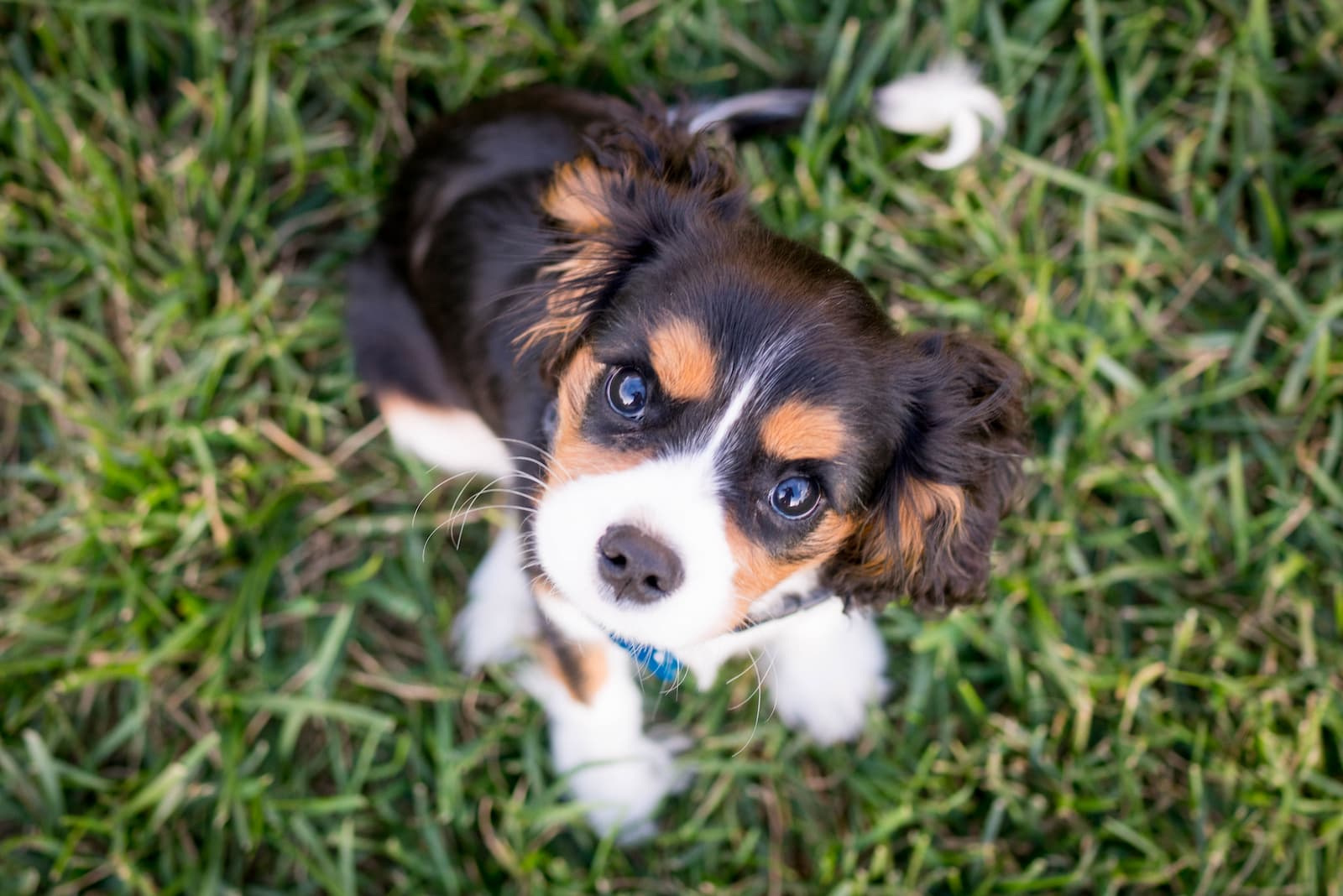 A cute puppy smiling at the camera.
